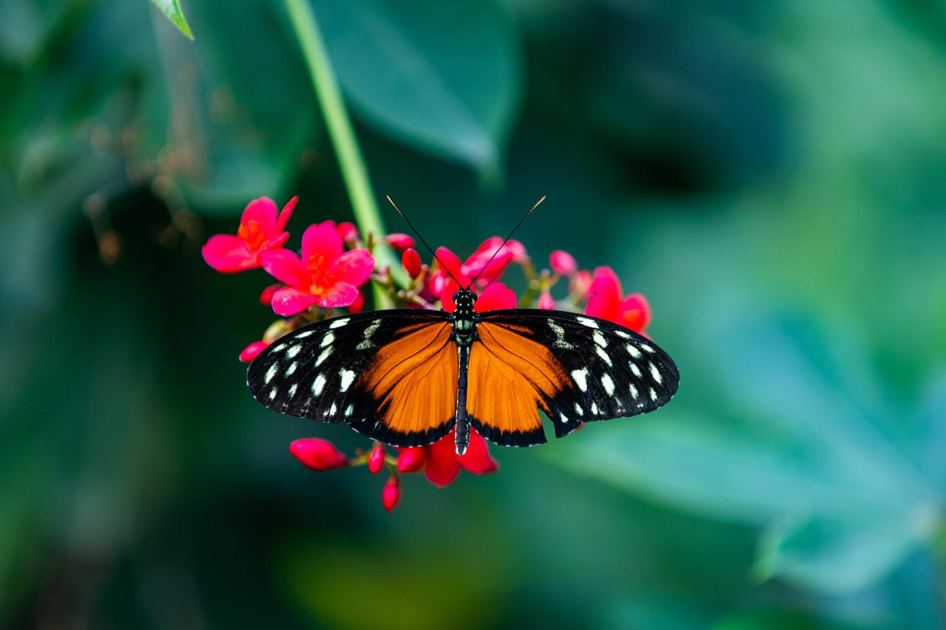 mariposa posando en una flor