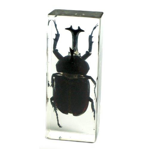 REALBUG Pisapapeles de Escarabajo de Rinoceronte (11,2 x 4,1 x 2,8 cm)